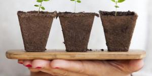 Леруа Мерлен представил топ-10 вещей, которые нужны сейчас, чтобы летом сад зацвел